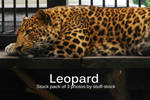 Leopard Stock Pack