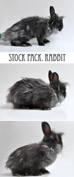 Rabbit stock pack
