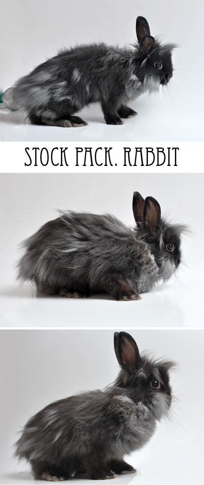 Rabbit stock pack by stuff-stock