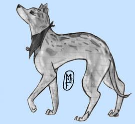 Greyhound- Koa