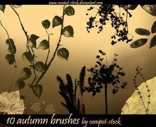 autumn brushes by compot-stock