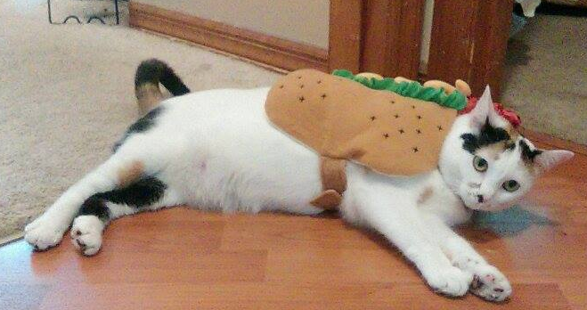 The Mystical New Years Hotdog Cat! by SlathBadgerGdcisBest