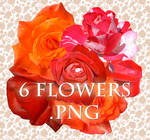 6 flowers PNG format