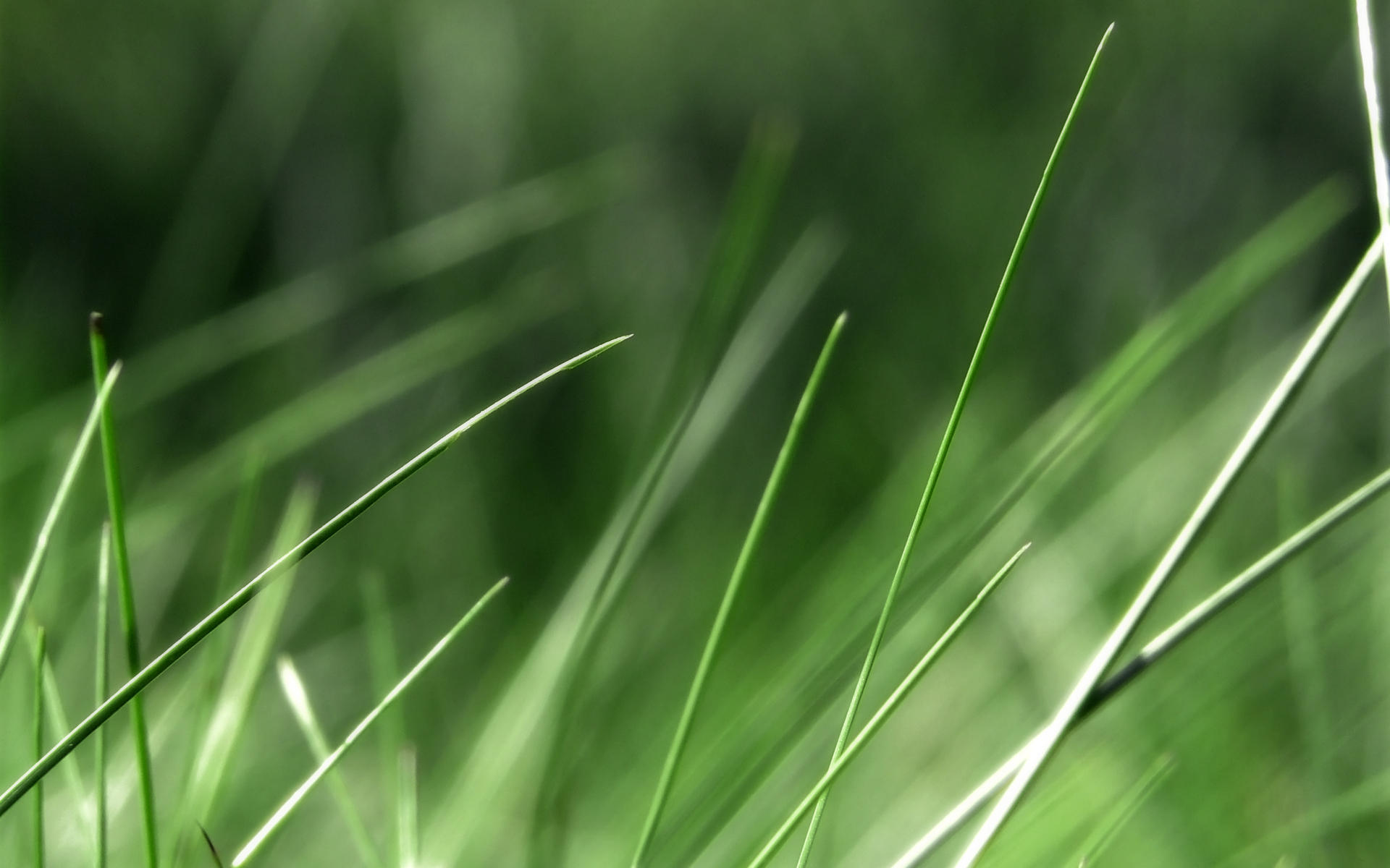 In the Grass by Vathanx