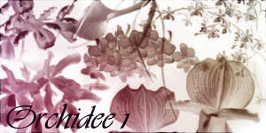 Brushes-Orchidee1