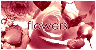 Flowers brushes by dawn-at-the-lake