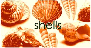 Shells brushes