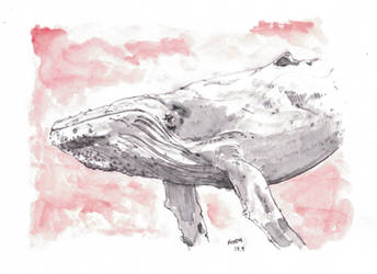 Humpback Whale by kinow