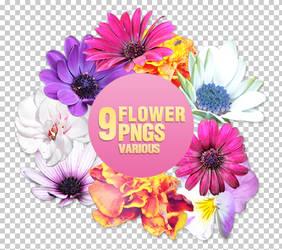Flower PNGs - 3004