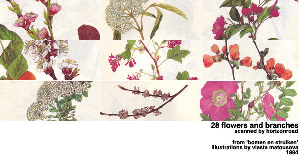scans_flowers_branches by horizonroad