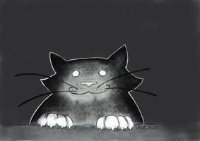 Cat of the night