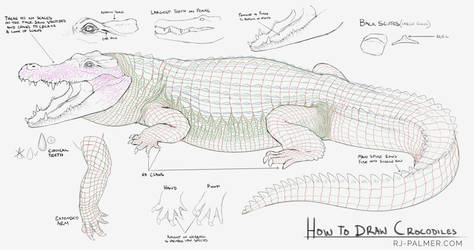 How to Draw Crocodiles by arvalis