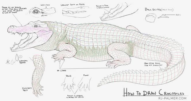 How to Draw Crocodiles