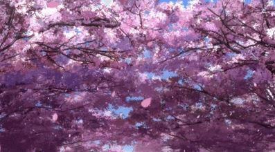 Sakura, Cherry Blossom - Gif AICO
