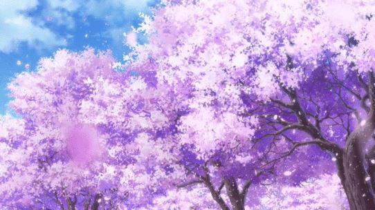 Sakura opening Hinamatsuri - gif 1