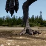 Qantassaurus Footprints