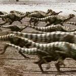 Qantassaurus And Timimus Stampede