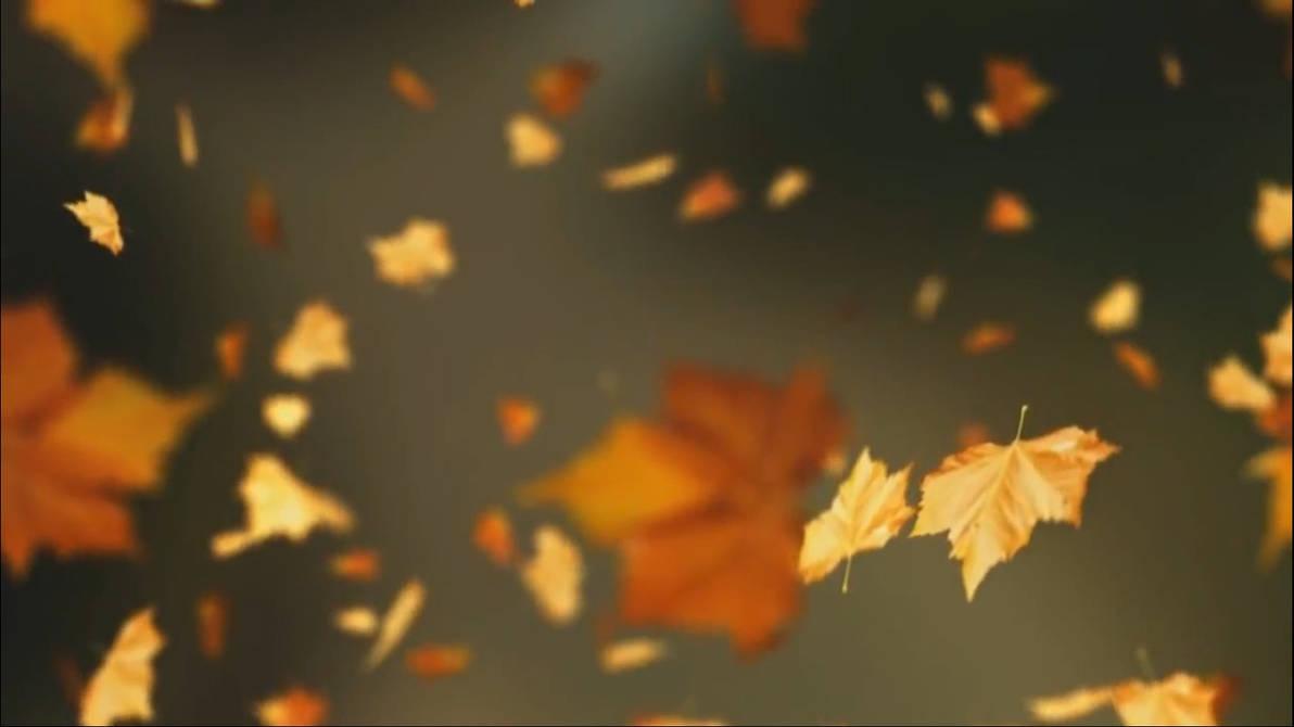 fall leaves live wallpaper