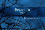 Branches STOCK