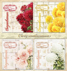 Chrysanthemums by auRoraBor