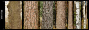 Bark Texture Pack