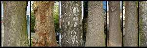 Bark Texture Pack 2