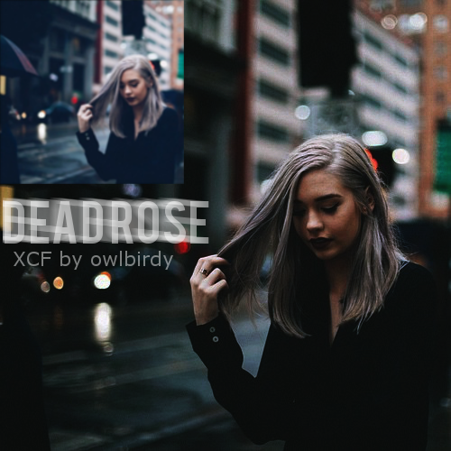 Dead Rose by Owlbirdy
