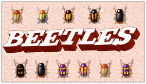 Beetles by bewhyareohin