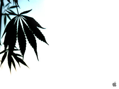 Apple Mac Wallpaper Marijuana Leaf Mac
