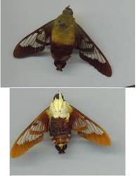 moth 01