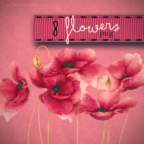 http://fc05.deviantart.net/fs71/i/2011/215/7/c/flowers_by_heyriotworld-d43ra0r.jpg