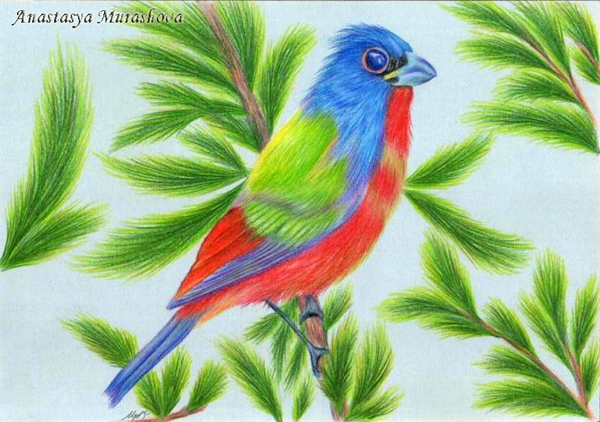 Colored Pencil Drawings Of Marbles : Drawing a bird with colored pencils using painted by