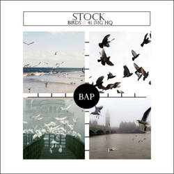 Stock 007 // Birds