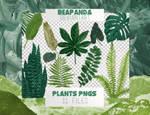 Renders 014 // Plants Pngs