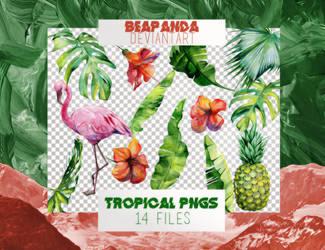 Renders 015 // Tropical Pngs by BEAPANDA