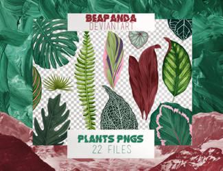 Renders 038 // Plants Pngs by BEAPANDA
