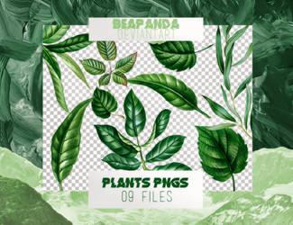 Renders 048 // Plants Pngs