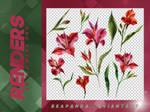 Renders 066 // Flowers Pngs