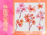 Renders 095 // Floral Pngs
