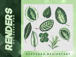 Renders 113 // Leaves Png