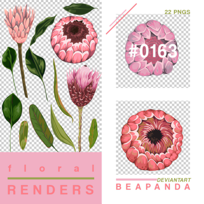 https://orig00.deviantart.net/ad21/f/2018/255/a/0/renders_163____floral_pngs_by_beapanda-dcmhimr.png