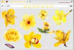 Renders 205 // Yellow Flowers Pngs