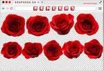 Renders 229 // Roses Pngs