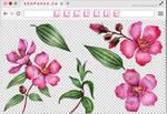 Renders 250 // Flowers Pngs