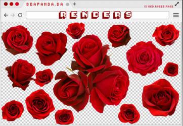 Renders 278 // Red Roses Pngs by BEAPANDA