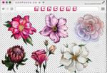 Renders 285 // Flowers Pngs