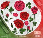 Renders 312 // Roses Pngs