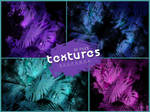 Textures 134 // Tropical