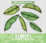RENDERS // Tropical Leaves Pngs