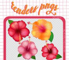 RENDERS | Tropical Flowers Pngs